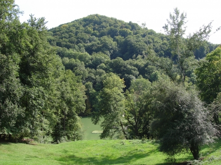 Geändertes Waldmanagement beeinflusst globale Kohlenstoffbilanz