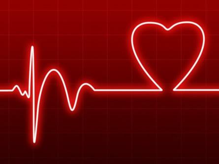 Lösungen für den WordPress Heartbeat Fehler